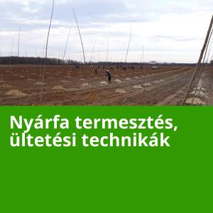 Hagyományos nyára termesztés, ültetési technikák